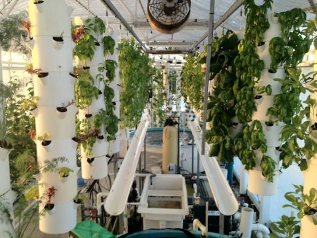 rooftop-aquaponic-system