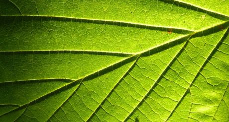 Leaf_&_sun_light